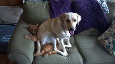 Dogs that hug, or sit on cats, too much #5.