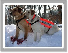 search and rescue dogs - love it!