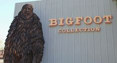 Bigfoot Collection    The Willow Creek - China Flat Museum in Willow Creek has one of the largest collections of Bigfoot artifacts in the Pacific North West. This area of the Klamath mountains has the most recorded sightings and evidence of this elusive creature, myth to some - very real to others! The mystery has yet to be solved.