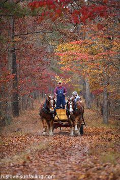 Take a ride in a horse-drawn wagon.