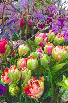 Lebenslustiger.com - Entries tagged as flower power spring flowers, secret gardens, plastic bottles, parrots, spring colors, spring garden, tulips, beauti flower, garden planning