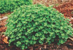 Growing Your Own Herbs in 6 Easy Steps - Chelsea Green : Chelsea Green