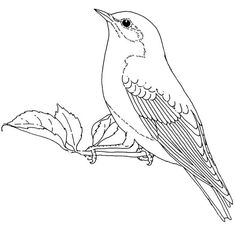 Bird outlines on pinterest bird sketch dover for Eastern bluebird coloring page