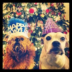 To happiness, health and pawsperity in the new year. Happy 2013!
