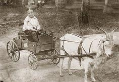 Little Harold gets a ride.