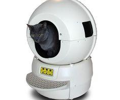 cat, litter box