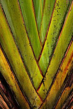 ~~nature close up by Ojisanjake~~