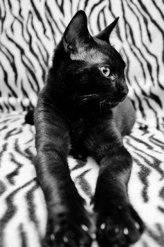 Black cat #cat #kitten