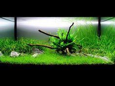 Freshwater Planted Aquarium - Serene | 寧