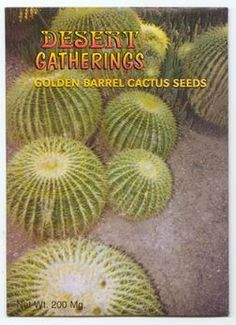 Golden Barrel Cactus - The Golden Barrel is a globular plant that grows very slowly. The cacti sports about 30 sharp ribs and has areolas that are covered in yellowish down. The spines are initially golden-yellow, later becoming whitish. The small brownish flowers are yellow on the inside and appear like a crown around the apex. $1.99