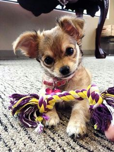 Am I cute or what??