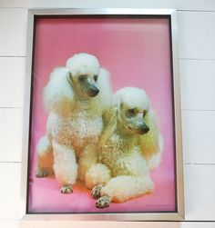 Two Poodles.