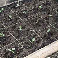 Secrets to a More Productive Vegetable Garden.