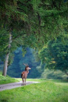 ❥ wildlife