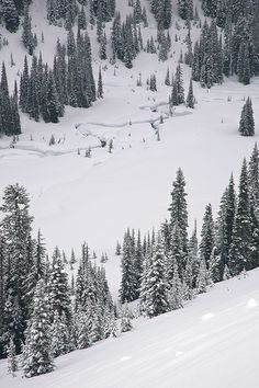 Snowstorm At Paradise, Mount Rainier National Park, Washington, USA