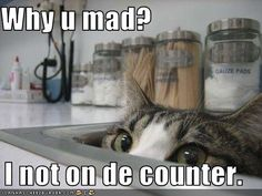 i think cats are hilarious.  and pictures of cats with funny captions, yes please.