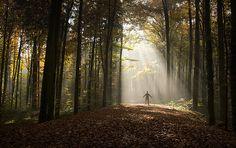 god, wood, picnics, stori inspirationn, bible, photographi, inspir imag