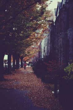 I saw the autumn leaves peel off the street...