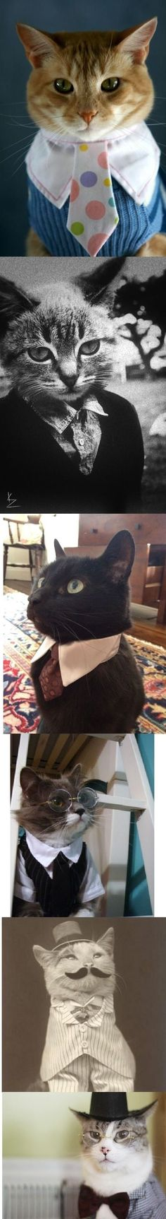 Want to make some kitty ties for the adoptable cats at the rescue where I work.