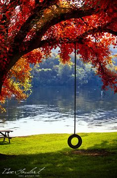tree swings, end of summer, autumn, dream, lakes, places, backyard, fall weather, spot