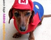 famili pet, dog dog, dogs, halloween costumes, pets