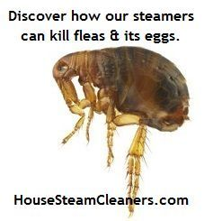 Read Steamer Cleaners #Fleas #in #the #House Article at HouseSteamCleaners.com.