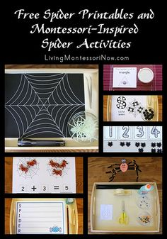 Free Spider Printables and Montessori-Inspired Spider Activities (long list of spider printables and Montessori-inspired spider activities created using free printables) classroom, school spiders, montessori ideas for preschool, printables, fall, preschool halloween, free spider, homeschool, spider activ