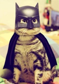 another batcat