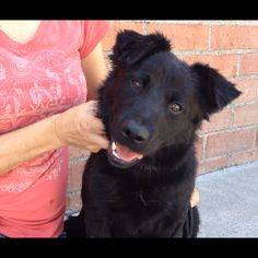 Tess, 1-yr-old female Border Collie x, new rescue!