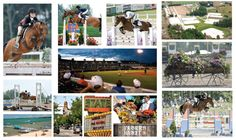 More scenes from Traverse City and Horse Shows by the Bay.