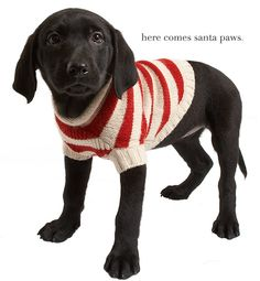 Hipster Christmas Sweaters On Pinterest Dog Sweaters