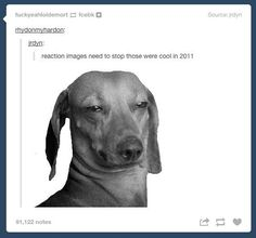 This easily countered lie. | 33 Responses That Prove Tumblr Has The Best Users Ever