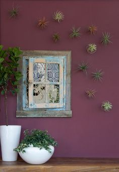 grubb garden, wall colors, window, green garden, flora grubb, plant decor, air plant, painted walls, wall gardens
