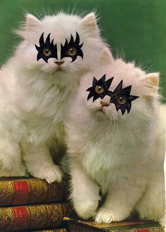 KISS Kittens by ☾ mona p., via Flickr