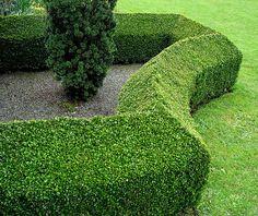 G R E E N on green hedging + metal