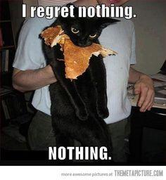 hahaha cats. lol