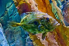 Colourful fish IMG_5653.jpg by inijjer, via Flickr