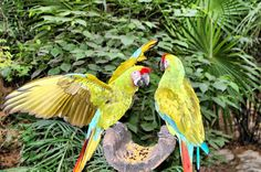 Cancun Mexico. Parrots at Xcaret