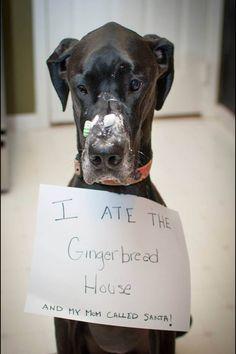 Minimalist gingerbread house - Great Dane Funny On Pinterest Great Dane Costume Mantle