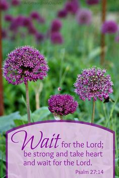 Wait for the Lord ::