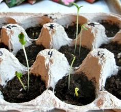 idea, egg carton, school, kids planting, earth day activities for kids, plants, earth activities, planting seeds, scienc