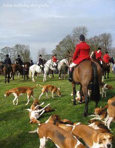 Belvoir hounds at Belvoir Castle for the last Meet of the 2011 season