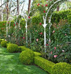 Latticework & Roses: California Garden - Traditional Home Dream yard idea