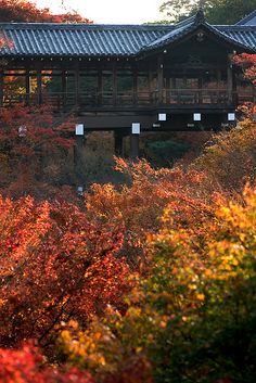 Tofuku-ji #japan #kyoto