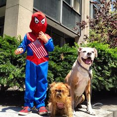 Happy Fourth of July from Peanut, Cookie & your friendly neighborhood Spiderman!
