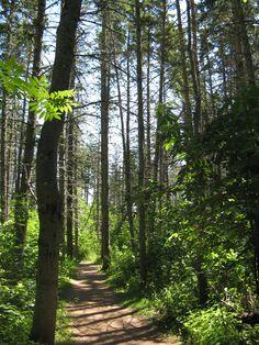 The Haunted Wood, Green Gables, Prince Edward Island