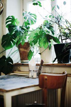 interior, green, indoor plant