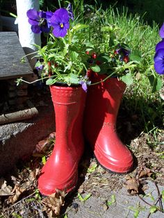 Love using rubber boots for my pansies!