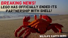 BREAKING NEWS! Lego has officially ended its partnership with Shell! - Wildlife Earth on Pinterest.