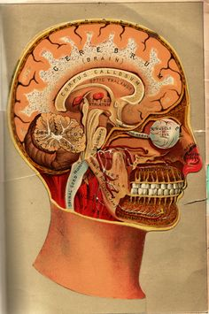 medicalschool:  Anatomical Flipbook, L.W. Yaggy & James J. West, 1885  *Don't try this at home. **Except maybe the lower right one...